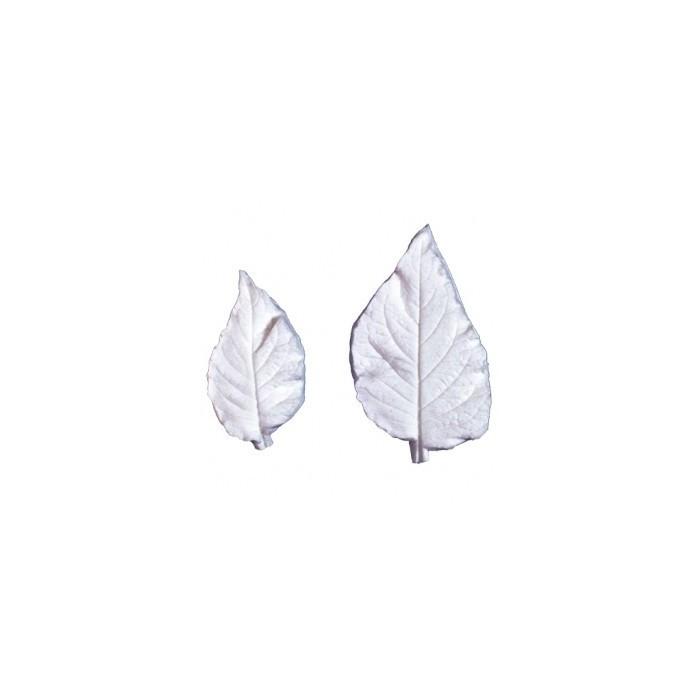 Venatore petalo amaryllis